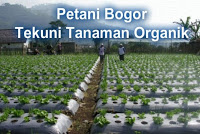 Petani Bogor Tekuni Tanaman Organik 233