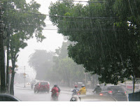 Puluhan Pohon Kota Bogor Rawan Tumbang 235