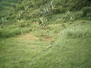 Hutan Konservasi Batulayang Ladang Berburu 238