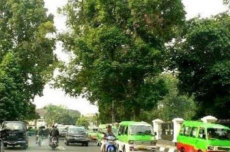 Kota Bogor Bukan Kota Termacet Di Indonesia 235
