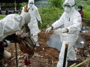 UPT Berikan Vaksin Avian Influenza 233