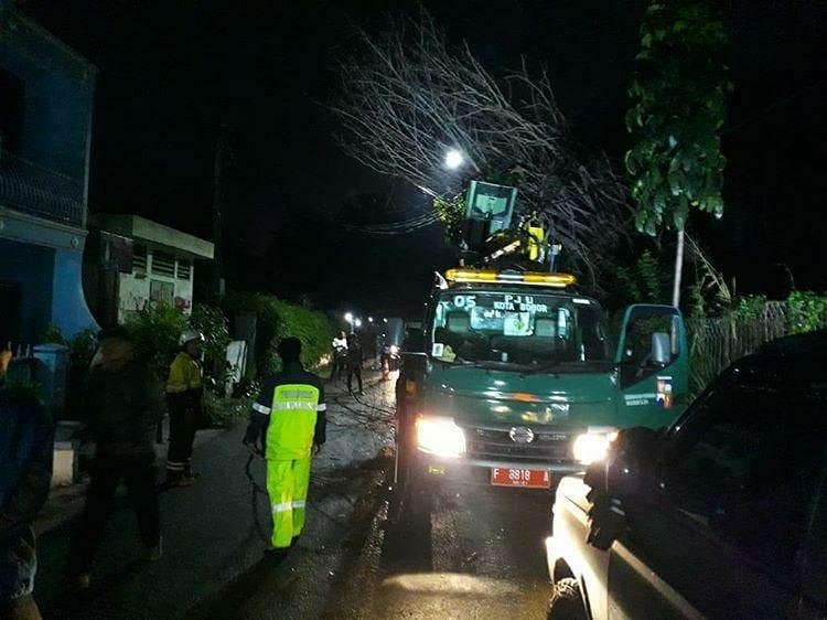 Pohon Tumbang Saat Hujan Deras 229